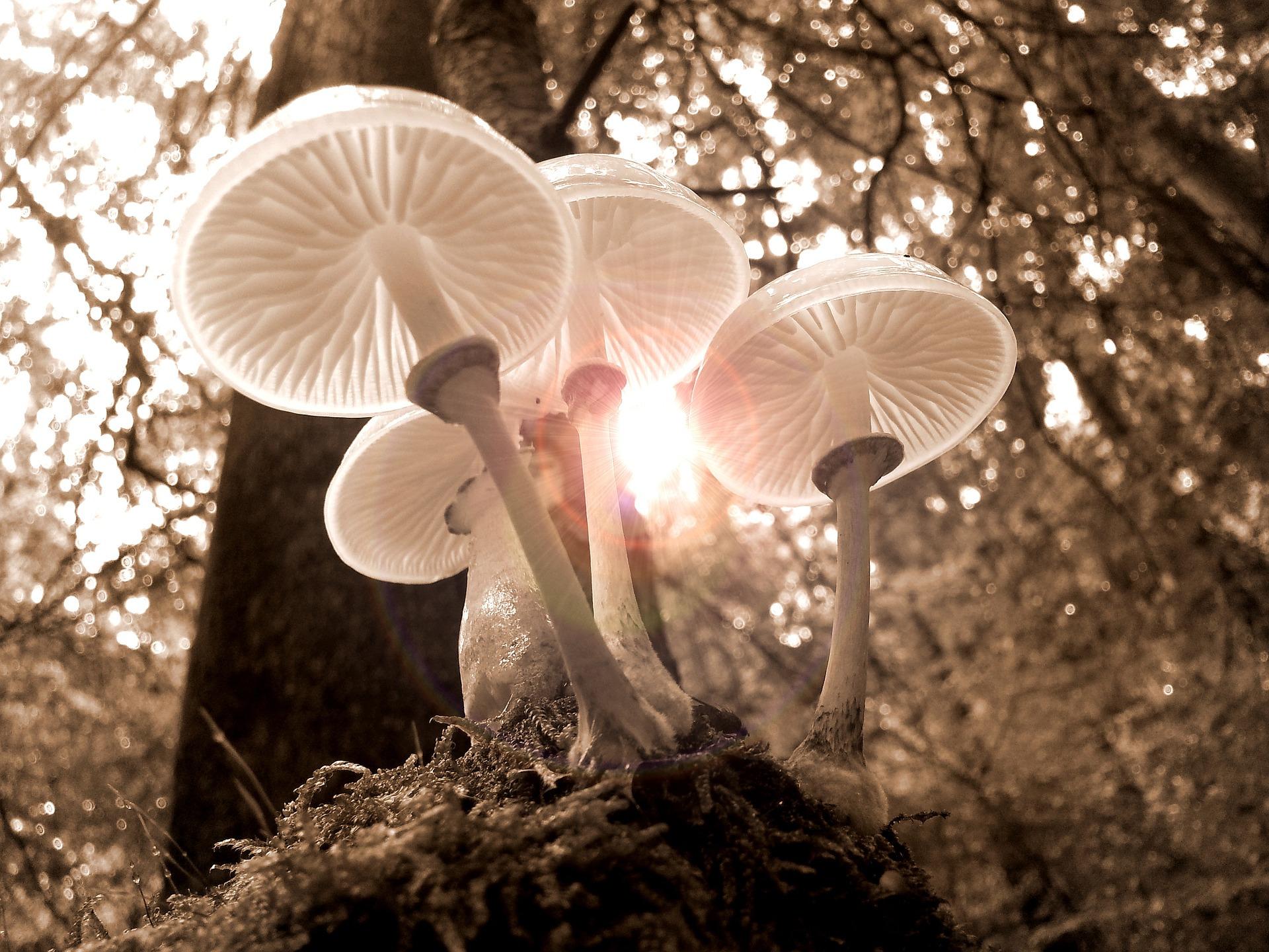 champignons intoxication